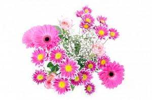 https://pixabay.com/en/flowers-flower-plants-nature-macro-163716/