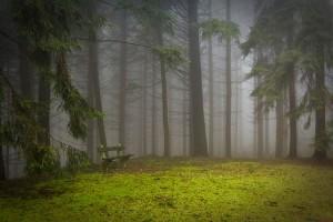 https://pixabay.com/en/pine-forest-pad-glade-misty-273826/