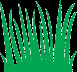 https://pixabay.com/en/grass-green-nature-meadow-field-309733/