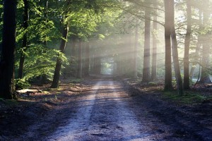 https://pixabay.com/en/road-sun-rays-path-forest-815297/