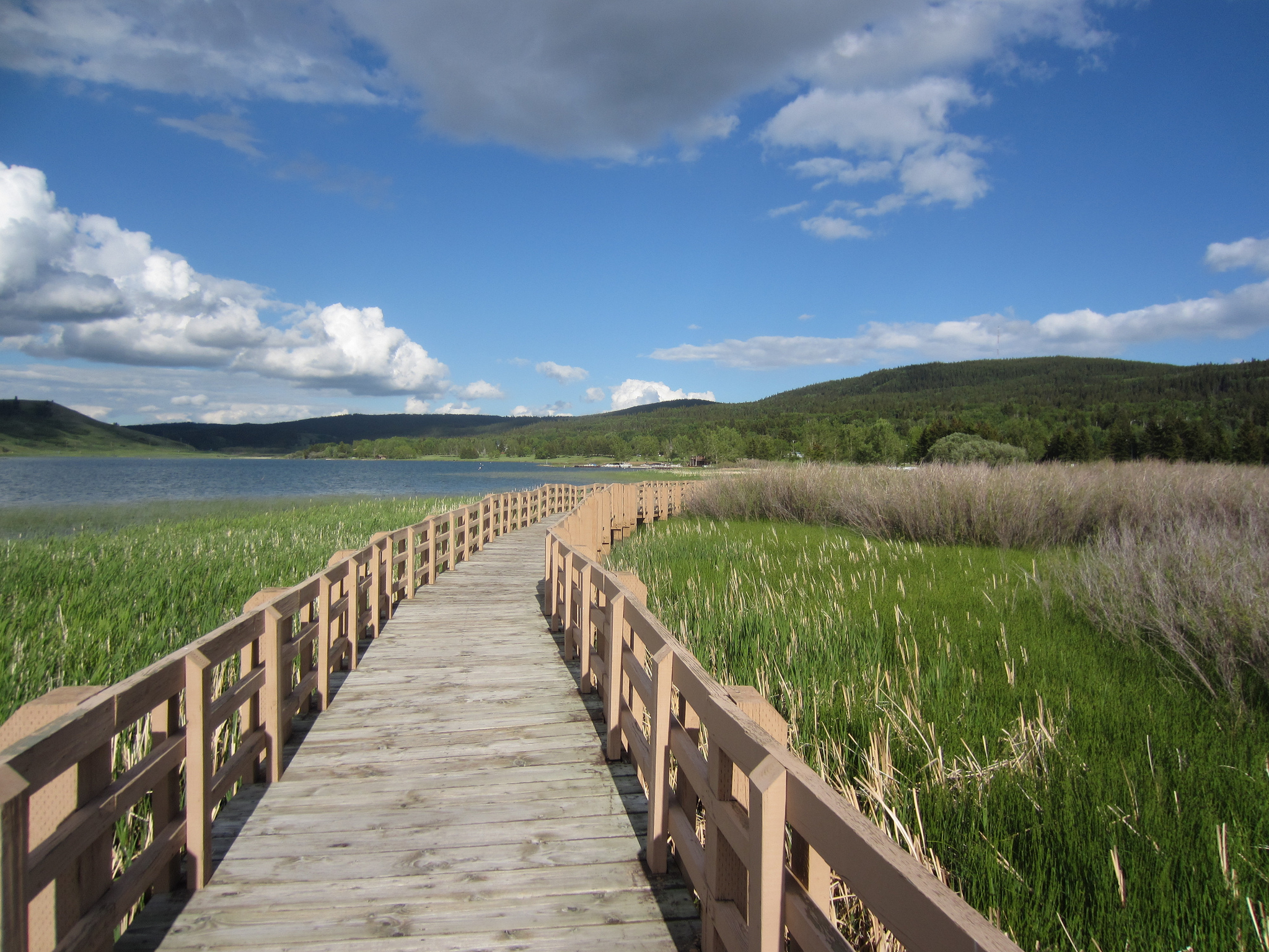 A walking bridge cuts between the tall grasses that grow in the shallow edges of a lake