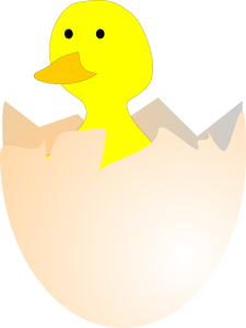https://pixabay.com/en/chick-hatching-egg-egg-shell-155546/