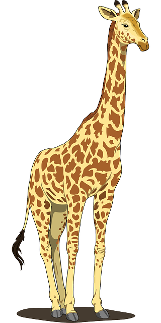 https://pixabay.com/en/giraffe-tall-spots-long-neck-tail-48393/