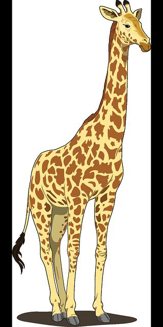 https://pixabay.com/en/giraffe-tall-spots-long-neck-tail-48393/