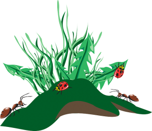https://pixabay.com/en/grass-insects-dirt-weeds-ants-46135/