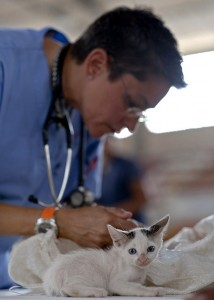 https://pixabay.com/en/kitten-veterinarian-feline-doctor-569873/