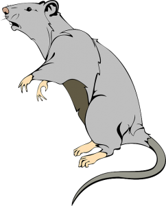 https://pixabay.com/en/rat-animal-mammal-mouse-pest-pet-312046/