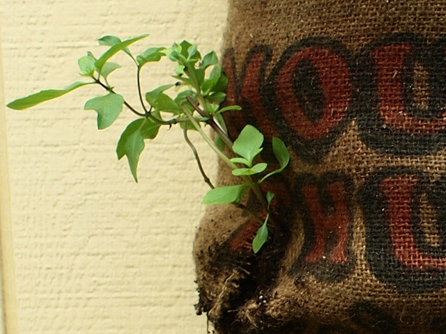 A small plant grows out of a sack