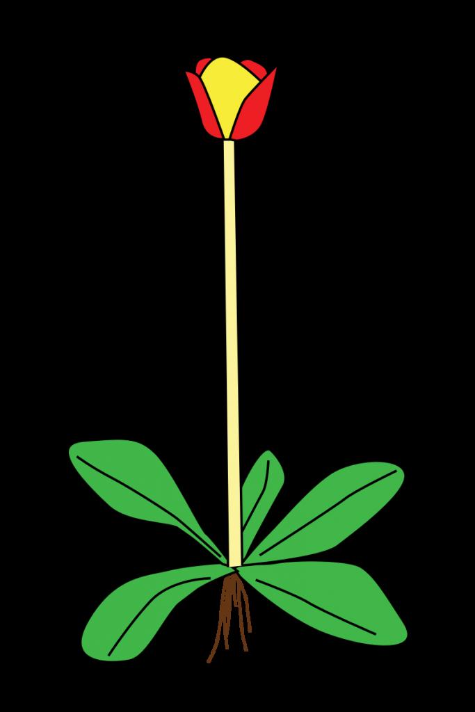 https://commons.wikimedia.org/wiki/File:Stem_morphology_type_scape.svg