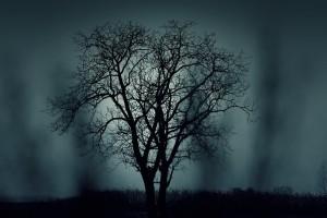 https://pixabay.com/en/tree-silhouette-mysterious-407256/