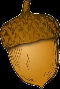 acorn-42791_640