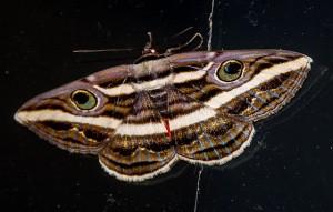 moth-645812_640