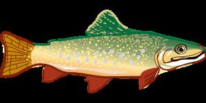 trout-294469_640
