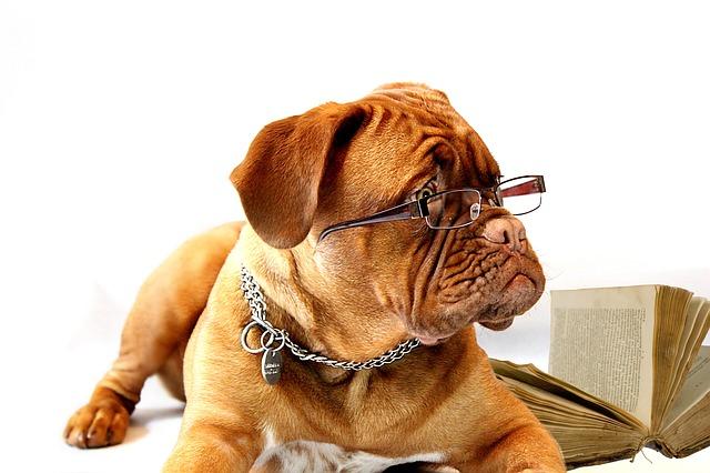 http://pixabay.com/en/dog-dogue-de-bordeaux-mastiff-734689/
