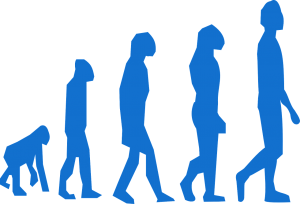 http://pixabay.com/en/evolution-monkey-man-transition-296400/