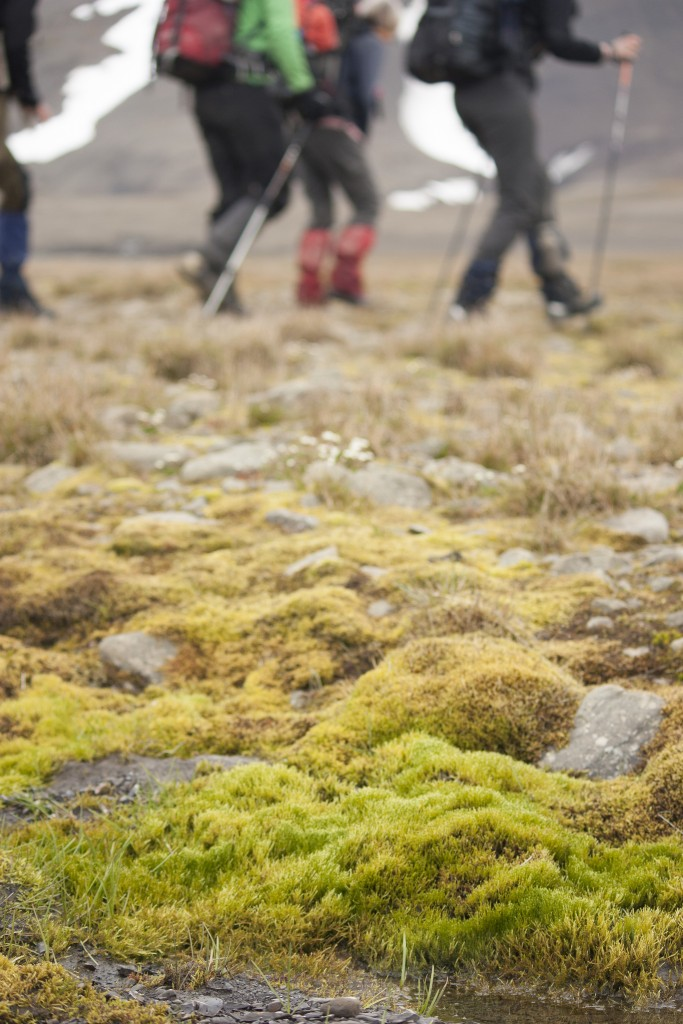 Moss grows on rocks on the ground. In the background, hikers go past.