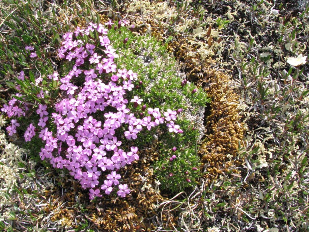 Small purple flowers grow on the ground near lichen or moss.
