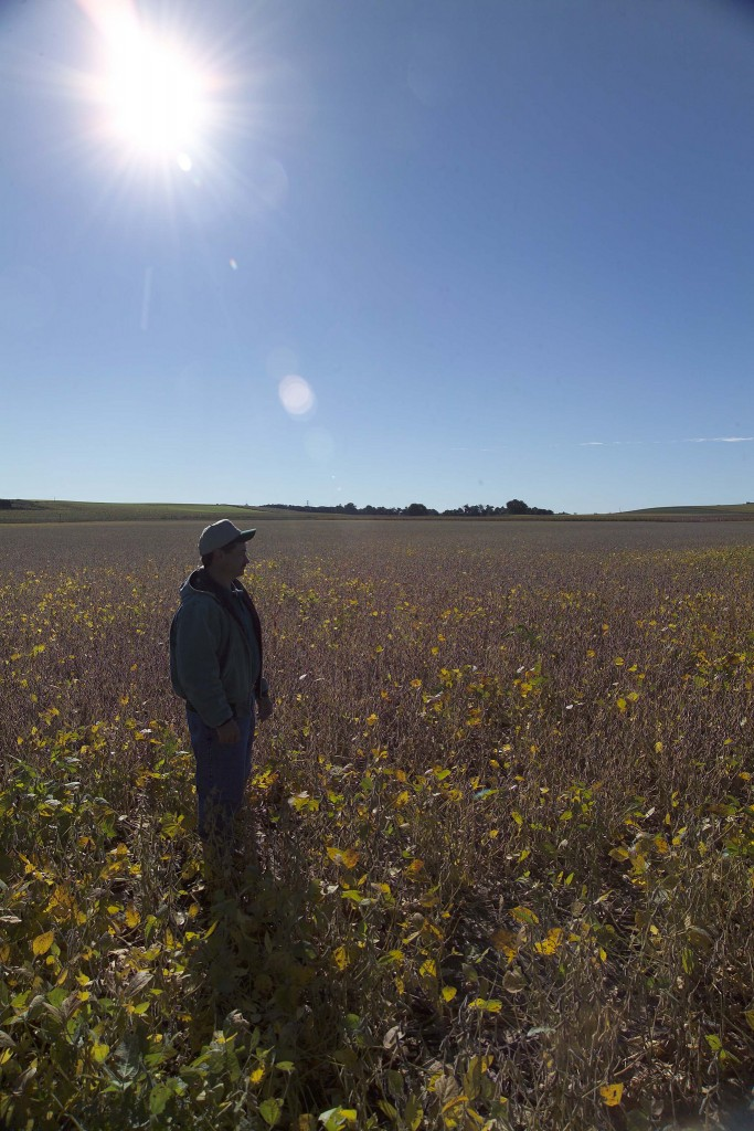 A farmer stands in a field full of low, yellow-leafed plants.