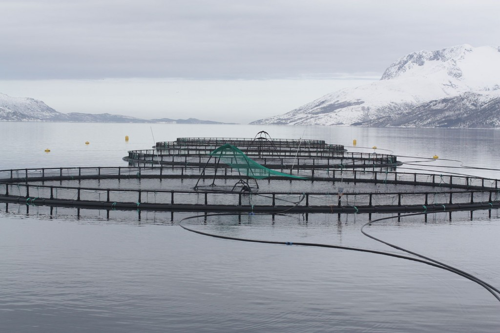 http://commons.wikimedia.org/wiki/File:Fish_cages.jpg