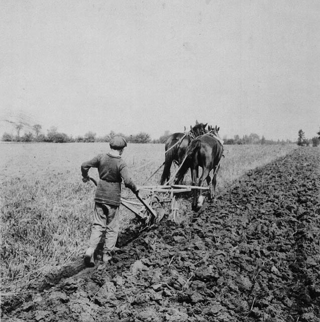 A boy pushes a plough pulled by two horses.