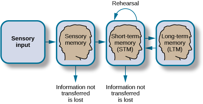 How memory functions. Long description available