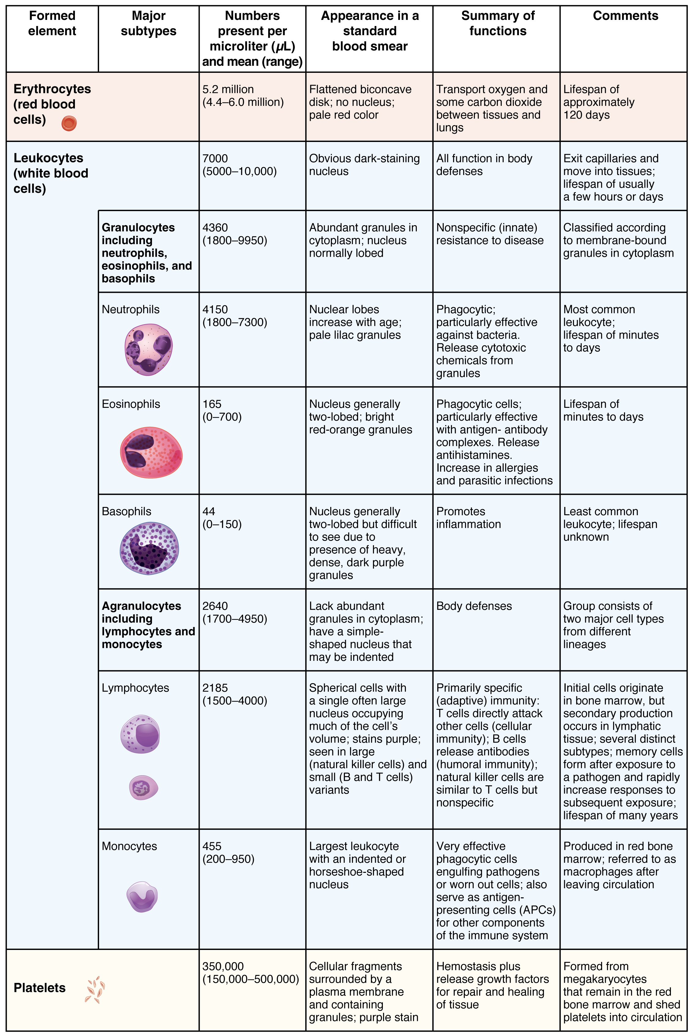 183 erythrocytes anatomy and physiology this table shows the different types of cells present in blood the number of cells nvjuhfo Choice Image