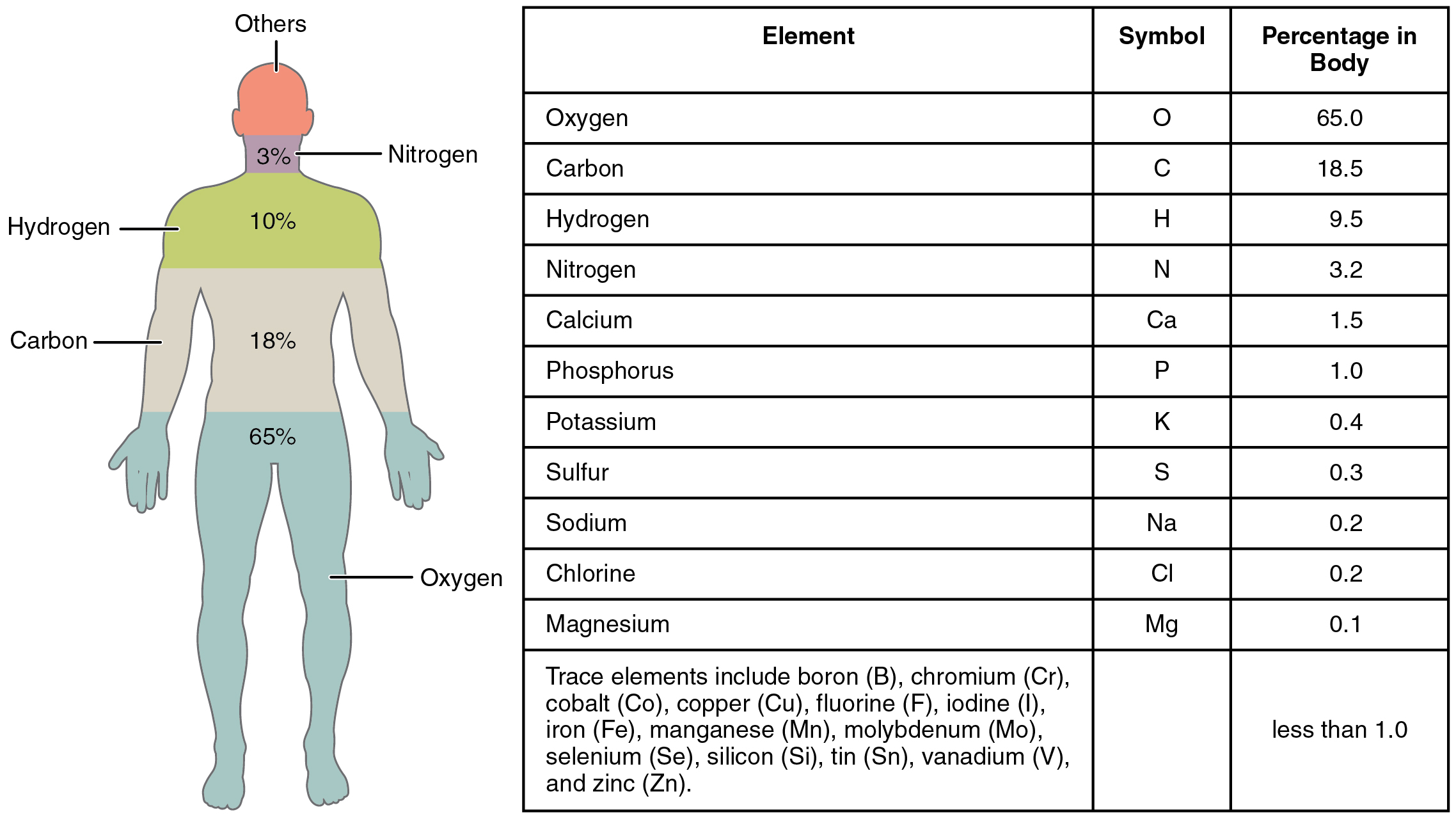 21 elements and atoms the building blocks of matter anatomy this figure shows a human body with the percentage of the main elements in the body gamestrikefo Choice Image