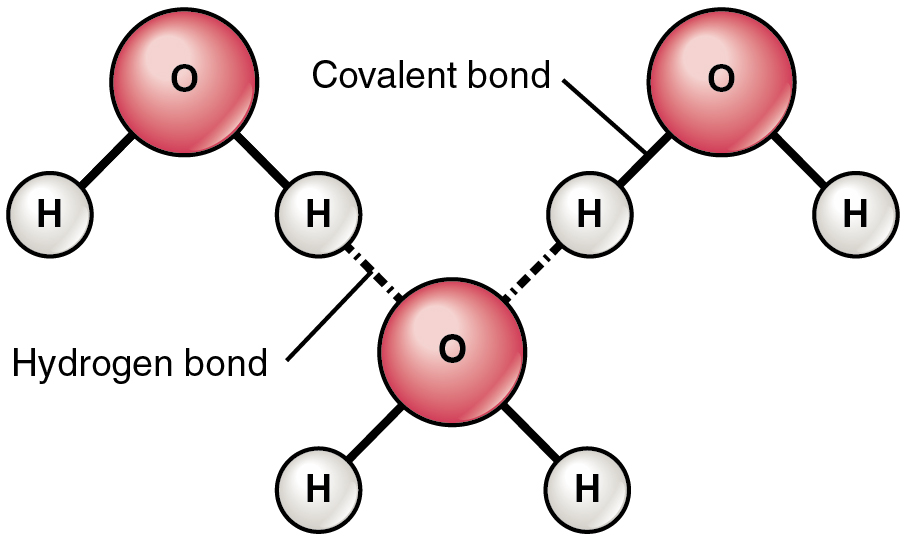 22 Chemical Bonds Anatomy And Physiology