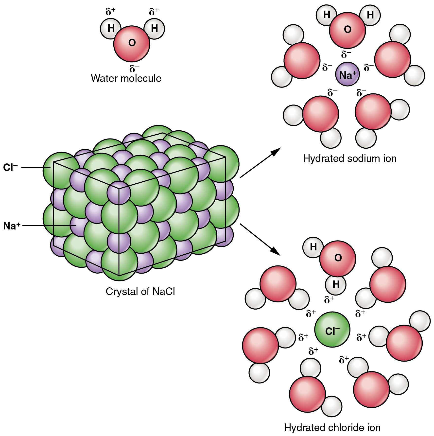 This figure shows a crystal lattice of sodium chloride interacting with water to form a hydrated sodium ion and a hydrated chloride ion.