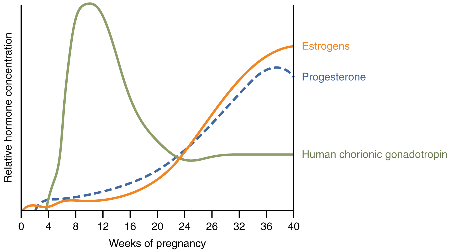 28.4 Maternal Changes During Pregnancy, Labor, and Birth – Anatomy ...