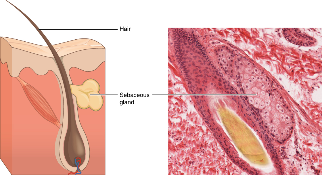 Clogged Sweat Gland In Feet Home Remedy