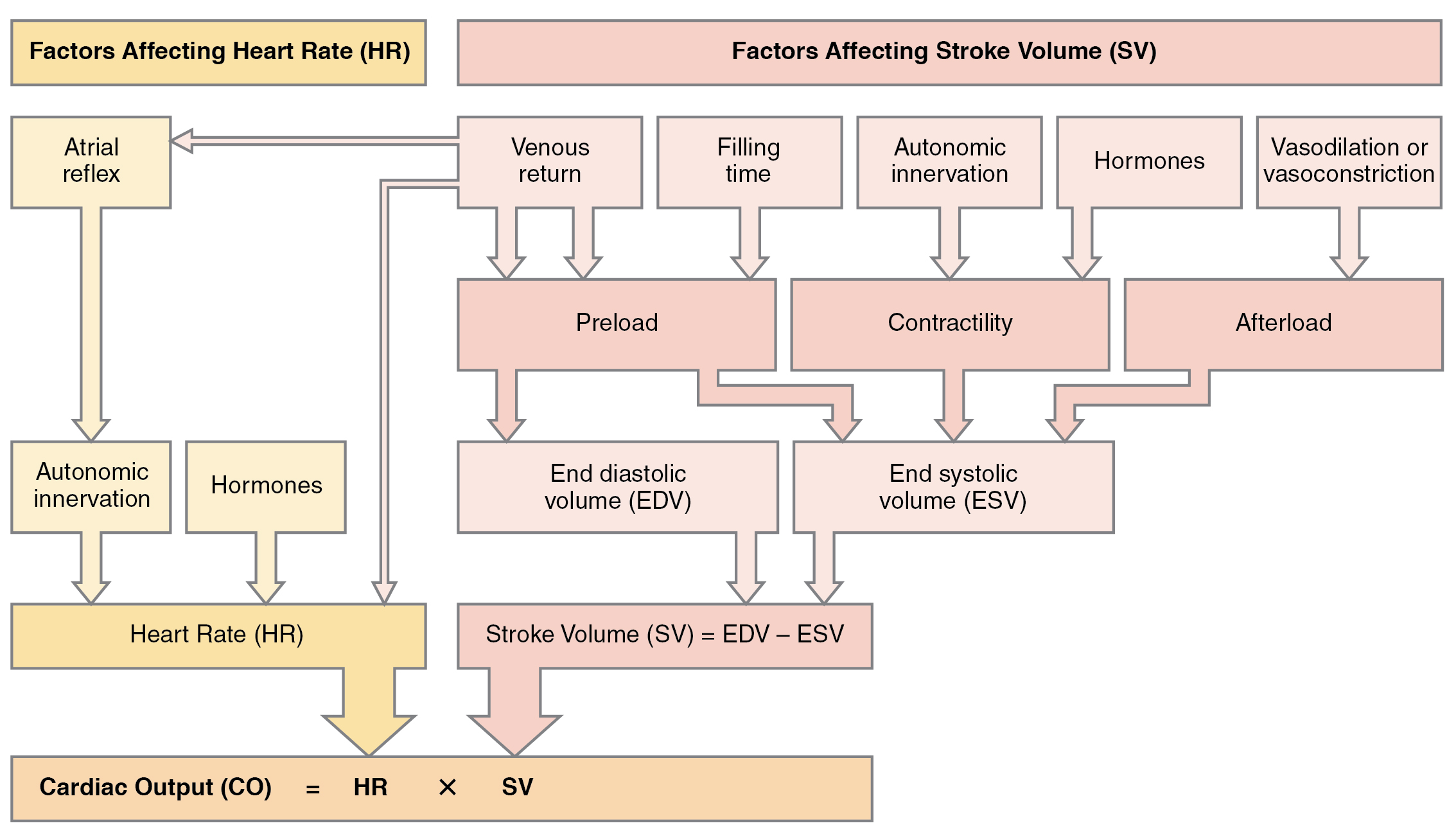 This flowchart lists all the important factors that affect cardiac output.