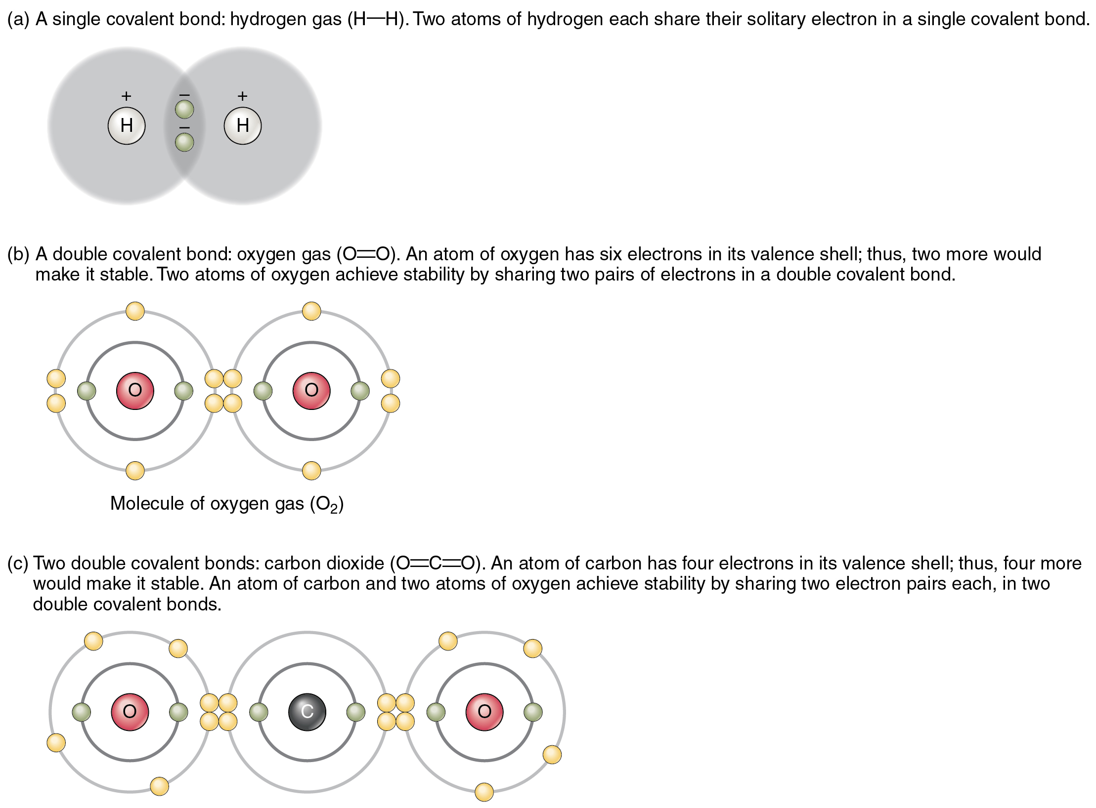 The top panel in this figure shows two hydrogen atoms sharing two electrons. The middle panel shows two oxygen atoms sharing four electrons, and the bottom panel shows two oxygen atoms and one carbon atom sharing 2 pairs of electrons each.