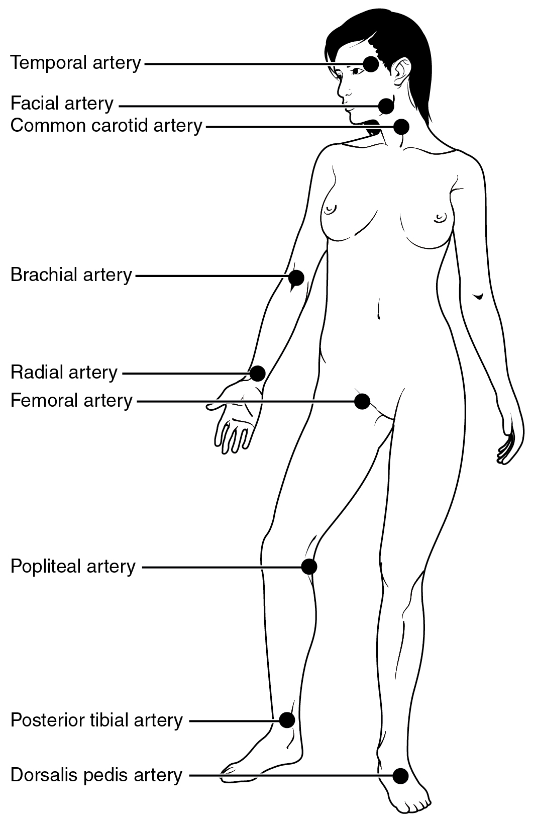 This image shows the pulse points in a woman's body.