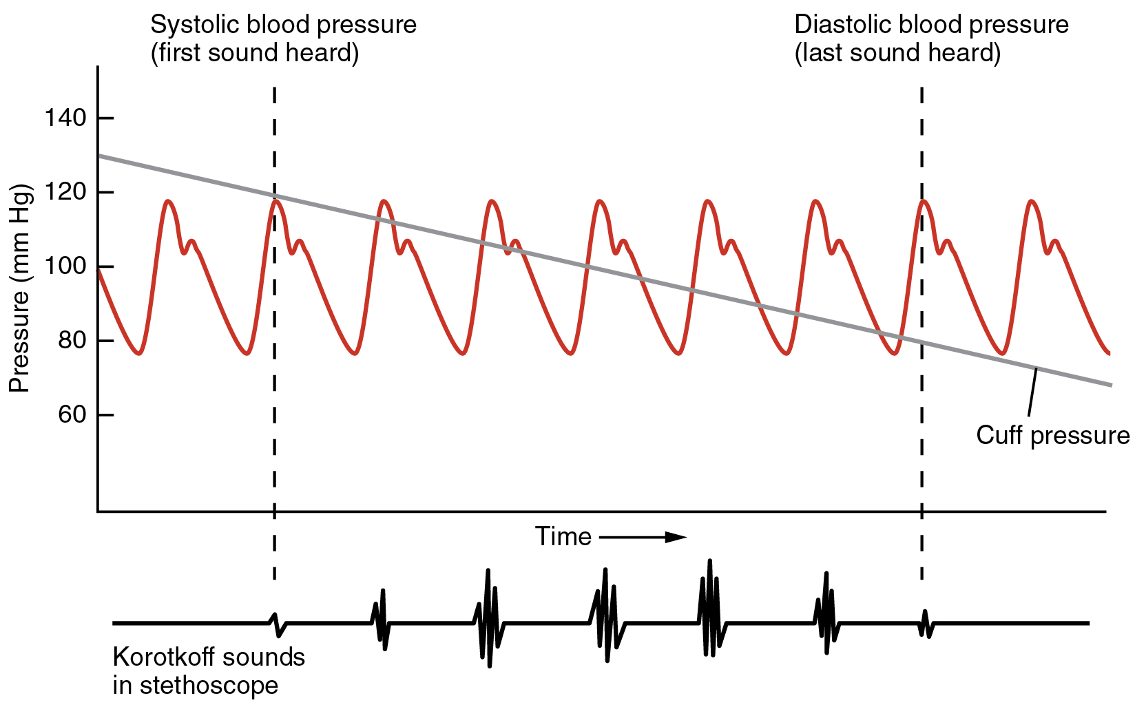 This image shows blood pressure as a function of time.