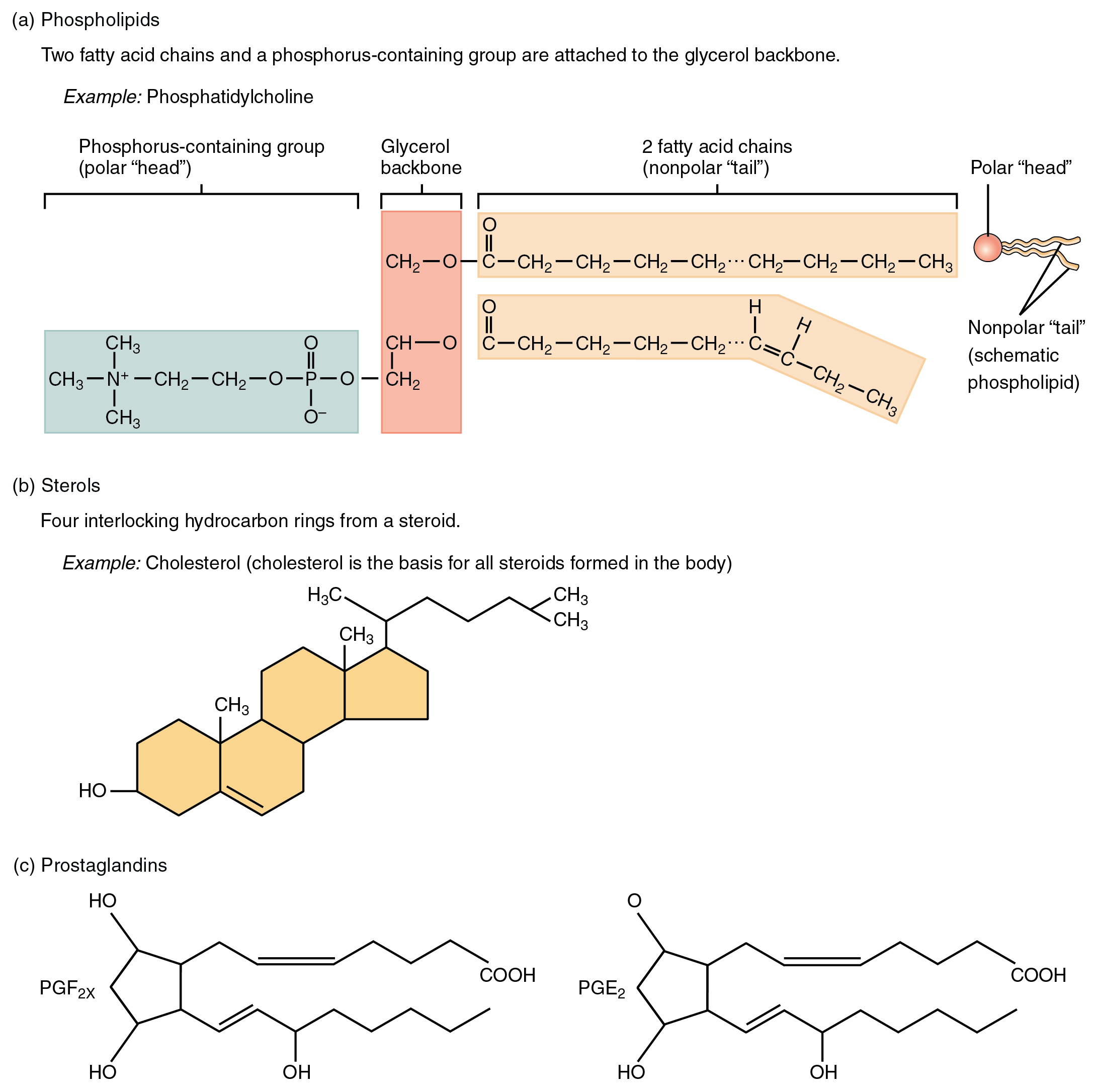 This figure shows the chemical structure of different lipids.