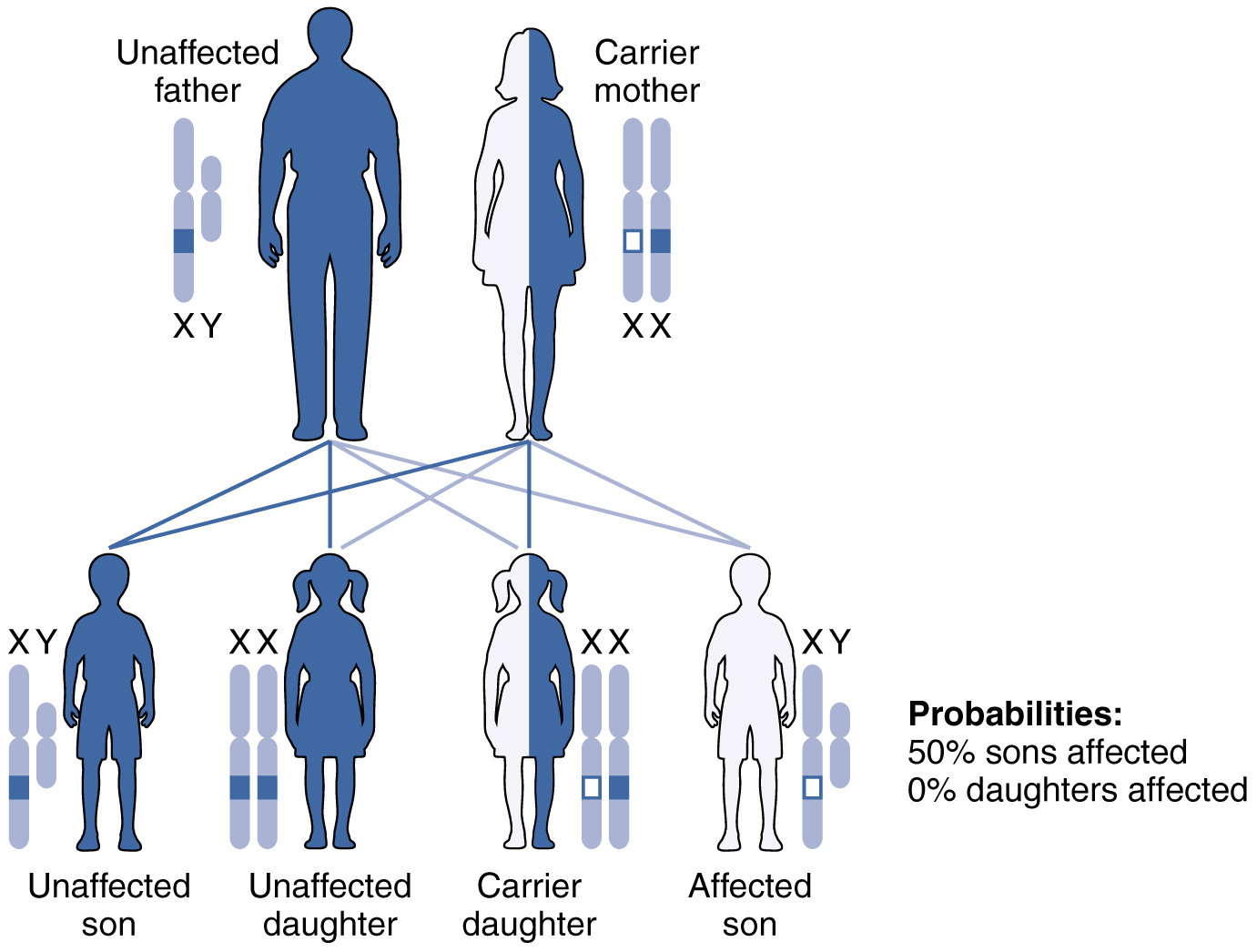 This figure shows the offspring from a carrier mother with the X-linked recessive inheritance.