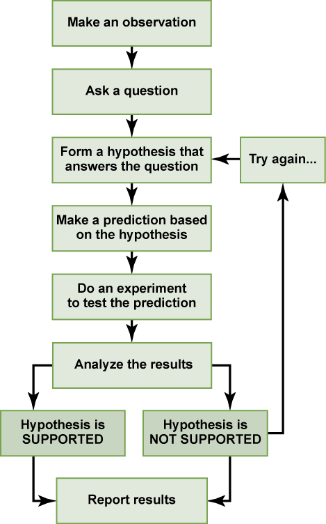 A flow chart shows the steps in the scientific method. In step 1, an observation is made. In step 2, a question is asked about the observation. In step 3, an answer to the question, called a hypothesis, is proposed. In step 4, a prediction is made based on the hypothesis. In step 5, an experiment is done to test the prediction. In step 6, the results are analyzed to determine whether or not the hypothesis is supported. If the hypothesis is not supported, another hypothesis is made. In either case, the results are reported.