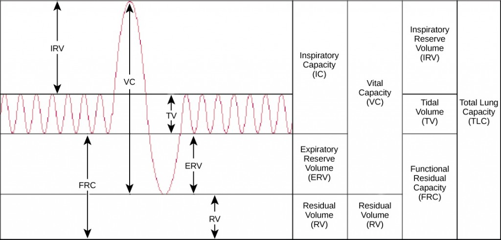Figure 39.12.  Human lung volumes and capacities are shown. The total lung capacity of the adult male is six liters. Tidal volume is the volume of air inhaled in a single, normal breath. Inspiratory capacity is the amount of air taken in during a deep breath, and residual volume is the amount of air left in the lungs after forceful respiration.