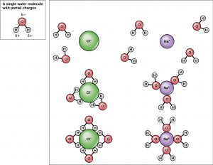 Illustration of spheres of hydration around sodium and chlorine ions.
