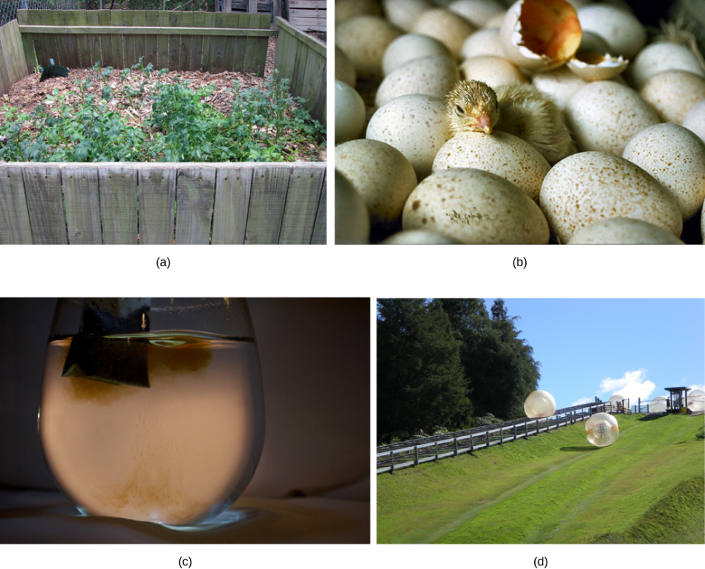 Four photos, from left to right, show a compost pile, a baby chick emerging from a fertilized egg, a teabag's dark-colored contents diffusing into a clear mug of water, and a ball rolling downhill.