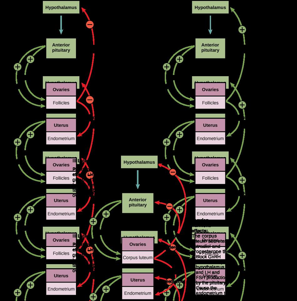 Figure_43_04_02f