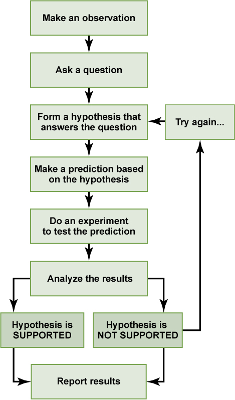 A flow chart shows the steps in the scientific method. In step 1, an observation is made. In step 2, a question is asked about the observation. In step 3, an answer to the question, called a hypothesis, is proposed. In step 4, a prediction is made based on the hypothesis. In step 5, an experiment is done to test the prediction. In step 6, the results are analyzed to determine whether or not the hypothesis is correct. If the hypothesis is incorrect, another hypothesis is made. In either case, the results are reported.