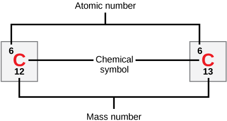 Carbon is indicated by its atomic symbol, a capital C. Carbon has the atomic number six and two stable isotopes, carbon-12 and carbon-13.