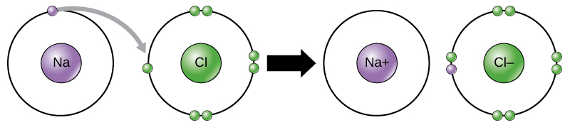 A sodium and a chlorine atom sit side by side. The sodium atom has one valence electron, and the chlorine atom has seven. Six of chlorines electrons form pairs at the top, bottom and right sides of the valence shell. The seventh electron sits alone on the left side. The sodium atom transfers its valence electron to chlorines valence shell, where it pairs with the unpaired left electron. An arrow indicates a reaction takes place. After the reaction takes place, the sodium becomes a cation with a charge of plus one and an empty valence shell, while the chlorine becomes an anion with a charge of minus one and a full valence shell containing eight electrons.
