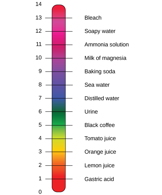 The lower case p upper case H scale, which ranges from zero to 14, sits next to a bar with the colors of the rainbow. The p H of common substances are given. These include gastric acid with a p H around one, lemon juice with a p H around two, orange juice with a p H around three, tomato juice with a p H around four, black coffee with a p H around five, urine with a p H around six, distilled water with a p H around seven, sea water with a p H around eight, baking soda with a p H around nine, milk of magnesia with a p H around ten, ammonia solution with a p H around 11, soapy water with a p H around 12, and bleach with a p H around 13.