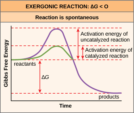 This plot shows the activation energy for an exergonic reaction. As the reaction proceeds, energy initially increases to overcome the activation energy. In a catalyzed reaction, the activation energy is much lower. The energy then decreases such that the Gibbs free energy of the products is less than that of the reactants. The activation energy is the peak of the energy plot minus the energy of the reactants. The Gibbs free energy is the energy of the products minus the energy of the reactants.