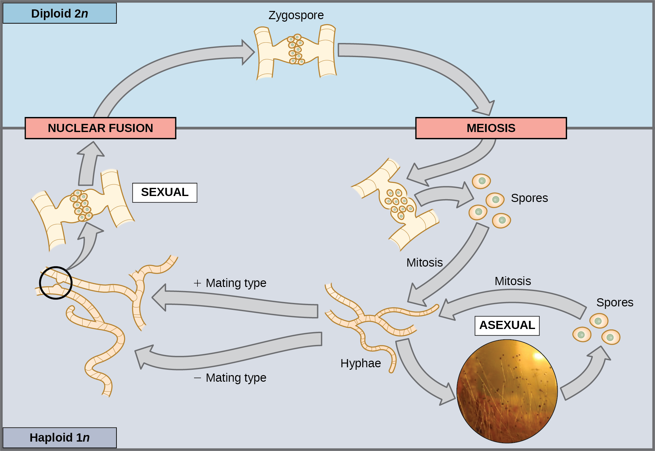 Sexual Reproduction – Biology 2e