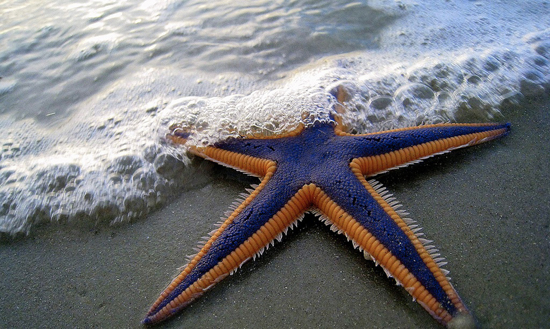 The photo shows a purple and orange starfish on a sandy flat beach.