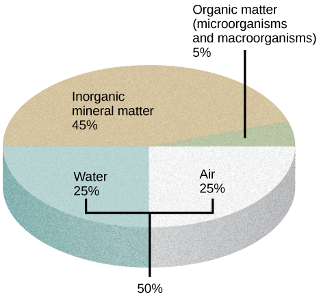 Illustration shows a pie graph that outlines the composition of soil. Forty-five percent is inorganic mineral matter, 25 percent is water, 25 percent is air, and 5 percent is organic matter, including microorganisms and macroorganisms.